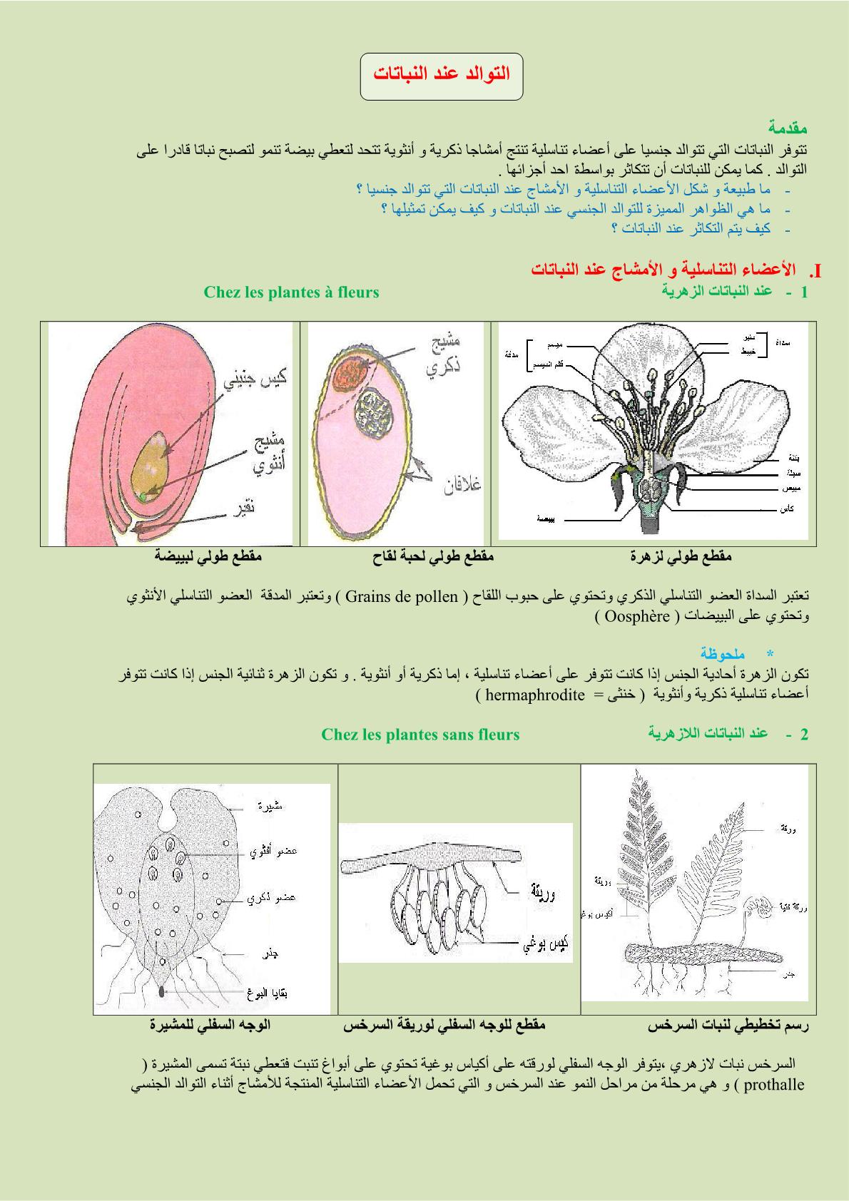 درس التوالد عند النباتات للسنة الثانية إعدادي